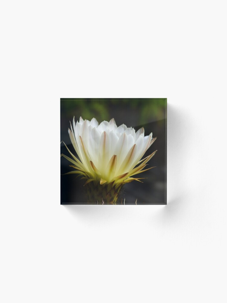 Alternate view of Illuminated White Petals Acrylic Block