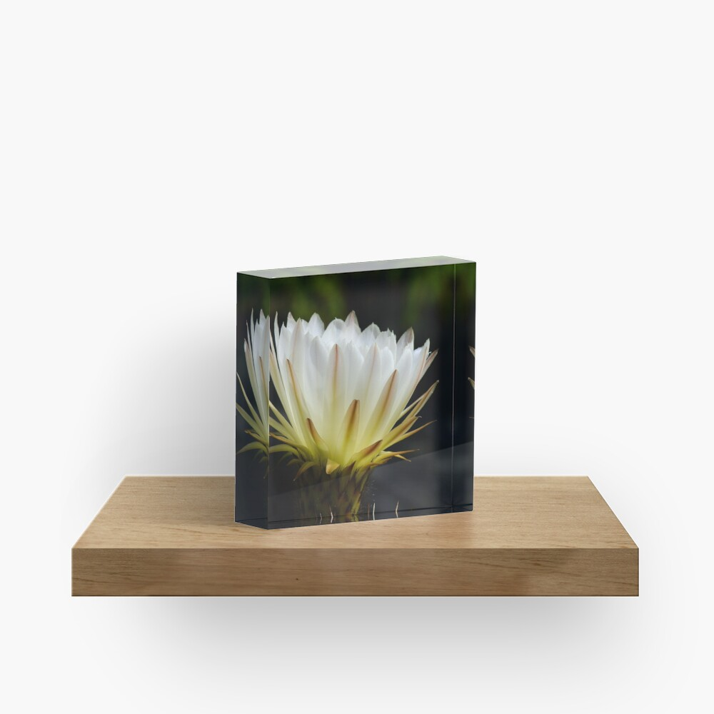 Illuminated White Petals Acrylic Block