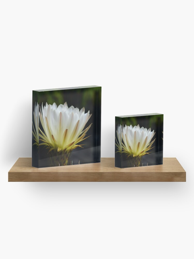 Alternate view of Illuminated White Petals Acrylic Block