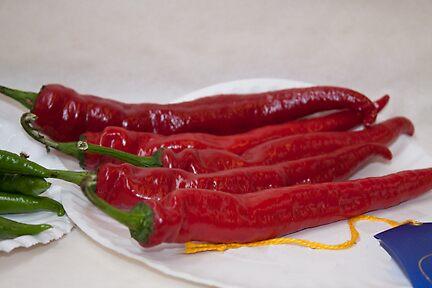 Blue Ribbon Peppers From The Fair by Karen Kaleta