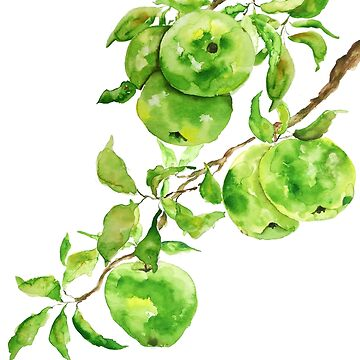 green apple watercolor painting  by ColorandColor