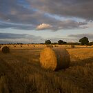 Evening haybales by Carole Stevens