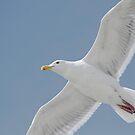 Seagull am sonnigen Tag von Peggy Collins