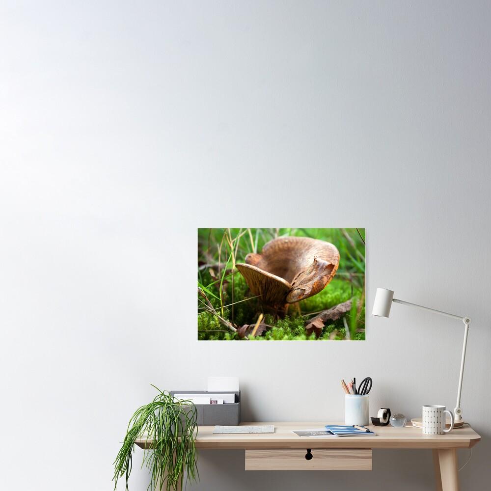 Brown saddle mushroom  Poster