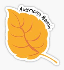 American Beech Sticker
