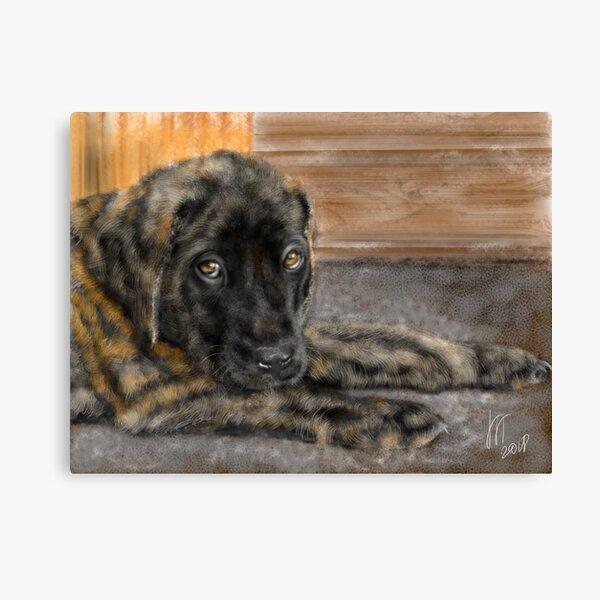 English Mastiff Puppy  Canvas Print