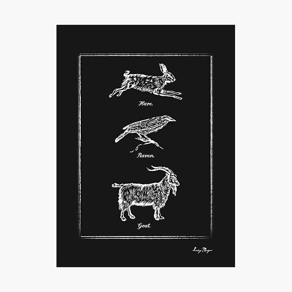Hare, Raven, Goat Photographic Print