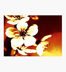 Oriental Blossom/Great White Cherry Abstract by Jenny Meehan Photographic Print