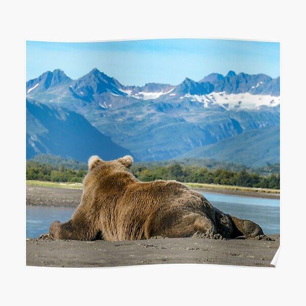 Resting Bear Cub Poster