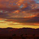 Desert Colors by Barbara  Brown