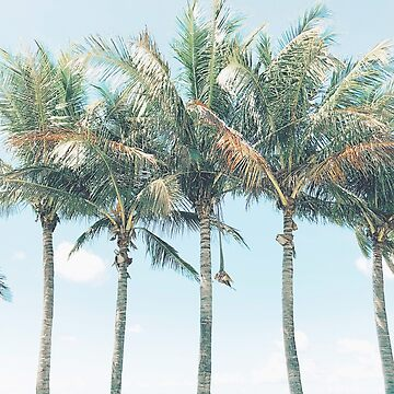 Tropical Palm Trees by oliviastclaire