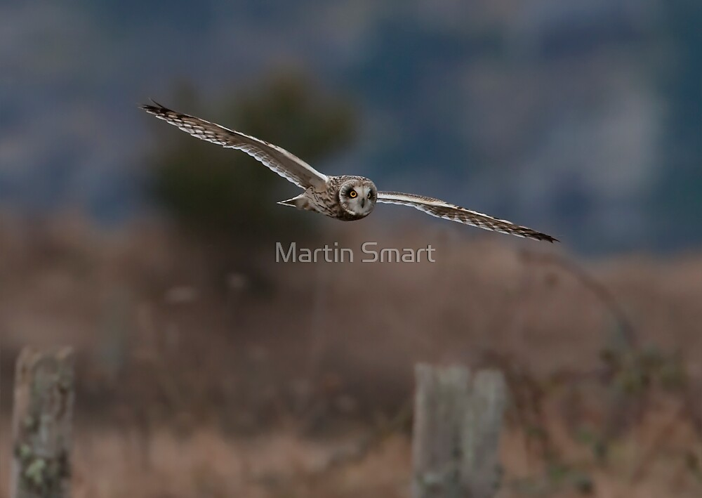 Daylight Manoeuvres by Martin Smart