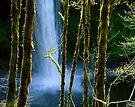 Silver Creek Falls by Zane Paxton