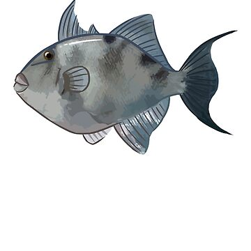 Gray Triggerfish by blueshore