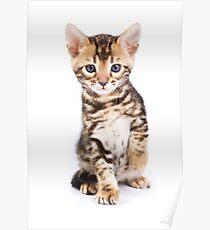 Cute striped ginger kitten Poster