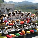 Plush puppies for sale by Susan Misicka