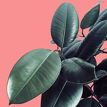 Ficus Elastica Summer Vibes #1 #coral #foliage #decor #art  by anitabellajantz