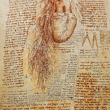 The Heart and the Bronchial Arteries ,Aorta Anatomical Drawing by BulganLumini