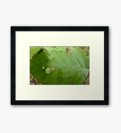 Holy Leaf Framed Print