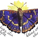 Apalura ilia f. clytie butterfly illustration by Wieskunde