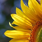 Here Comes the Sun by Roxanne Persson