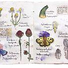 botanical spread dutch landscape illustration by Wieskunde