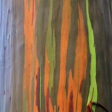 Rainbow Eucalyptus by djphoto