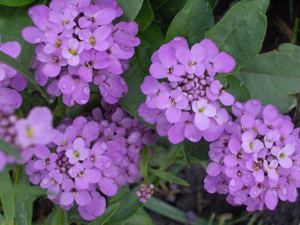 Tiny flowers by Anita Konopka