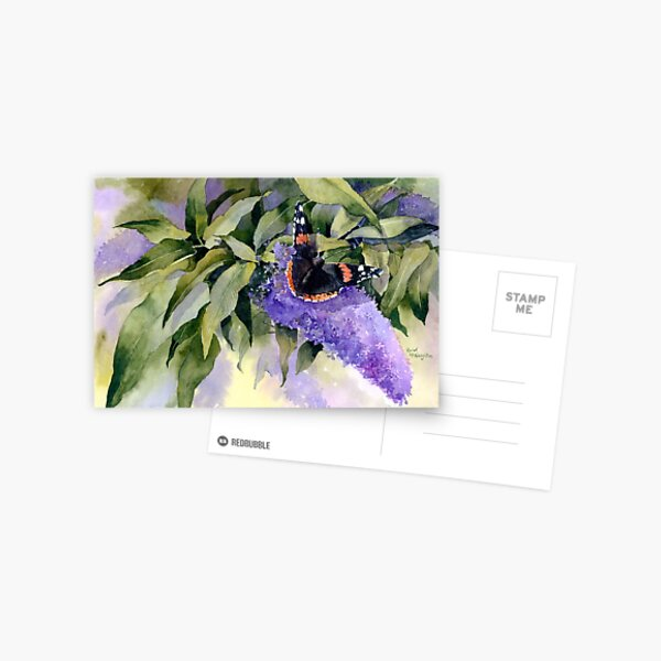 Buddleia with Red Admiral Butterfly Postcard