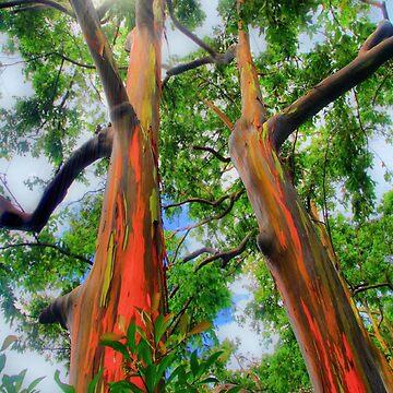 Wondrous Eucalyptus by djphoto