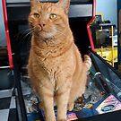 Meow 2000 by 904PinballZine