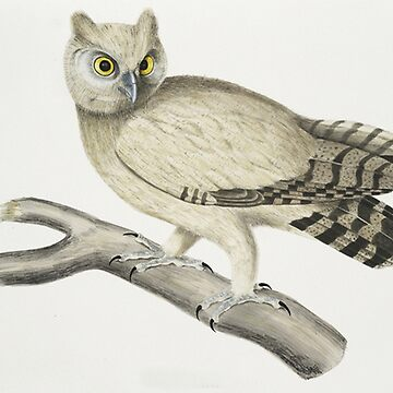 Little Owl by Geekimpact