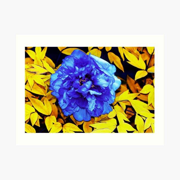 Flower Abstraction Art Print
