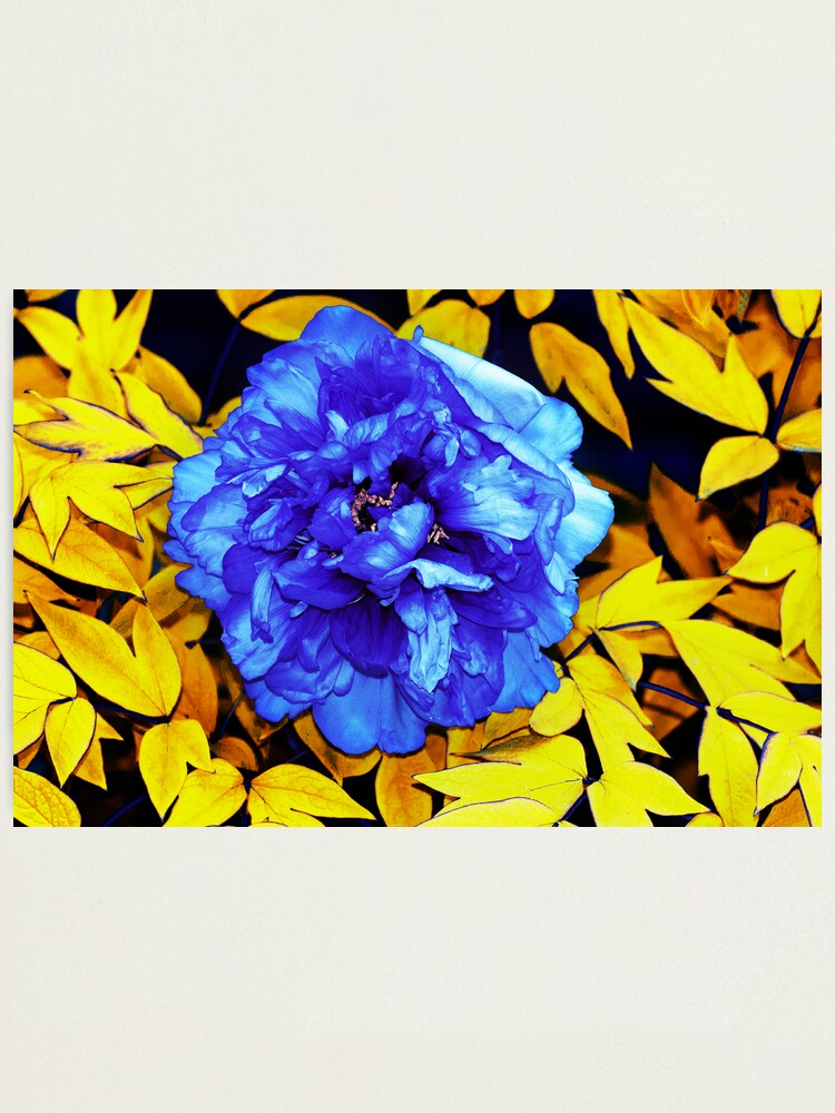 Alternate view of Flower Abstraction Photographic Print