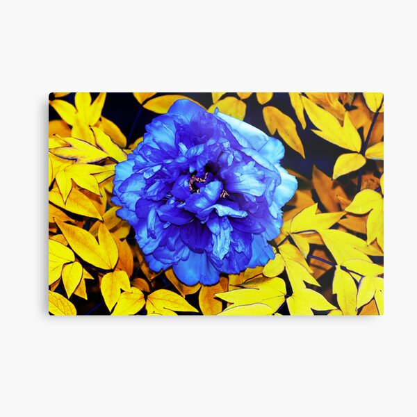 Flower Abstraction Metal Print