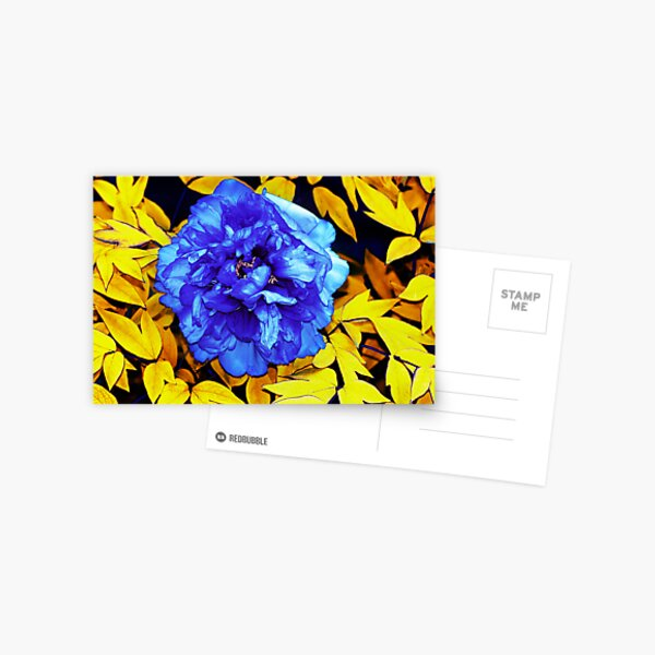 Flower Abstraction Postcard