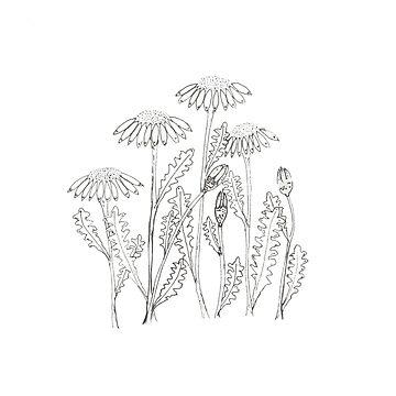 Hand Drawn Daisies by MADEBYCATHERINE