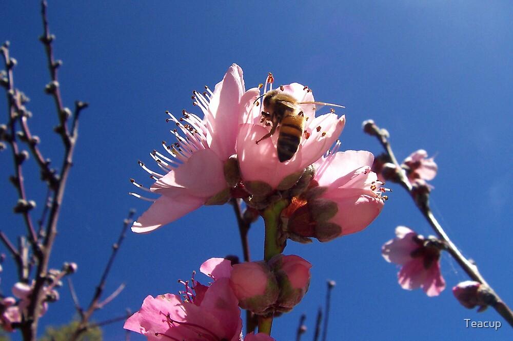 Peach Blossom Buzz by Teacup