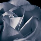 just one more rose by sabrina card
