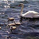 Swan Lake by Nancy Richard
