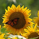 The butterfly the bee and the sunflower by Heather King