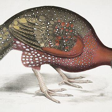 Pheasant by Geekimpact