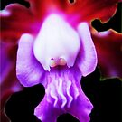 Serendipity!  - Orchid Alien Discovery by ©Ashley Edmonds Cooke