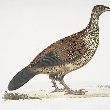 Pheasant illustration by Geekimpact