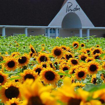 Sunflowers at Pindar Winery by woodeye518