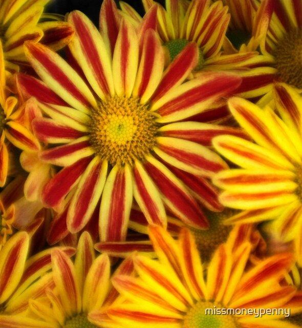 A blanket of flowers by missmoneypenny