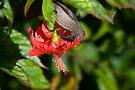 Sunbird by Walter Quirtmair