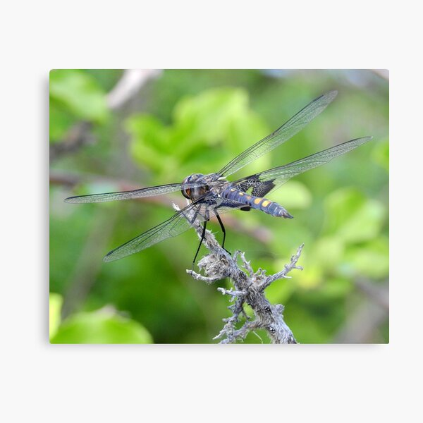 Dragonfly by the Mystic River Metal Print