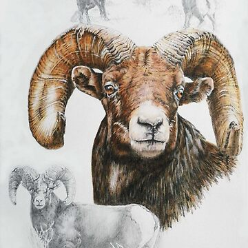 North American Big Horn Sheep by BarbBarcikKeith