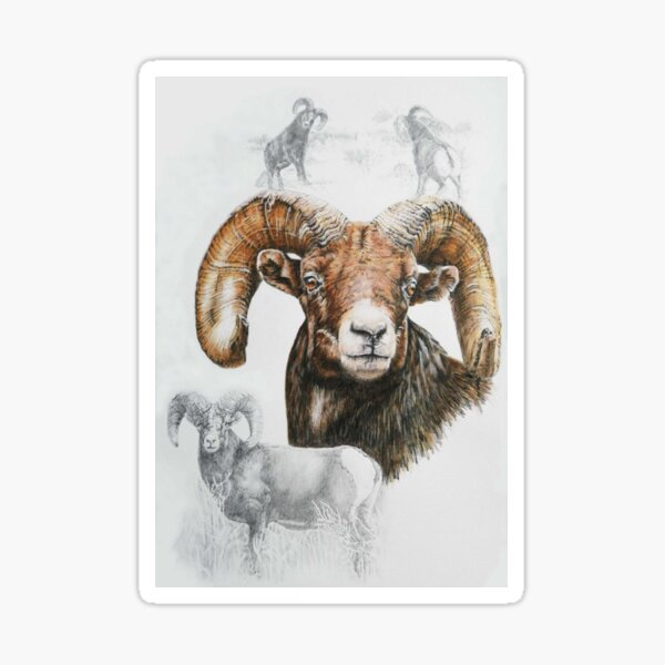 North American Big Horn Sheep Collage Sticker